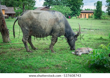 animal giving birth stock images royaltyfree images