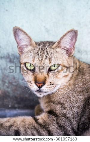 Thai cat on street - stock photo