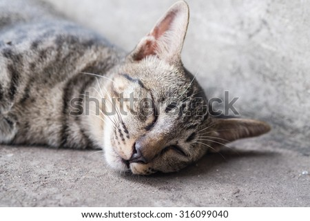 Thai Cat's sleeping on the ground with the comfy face in the afternoon time (Selective Focus Point) - stock photo