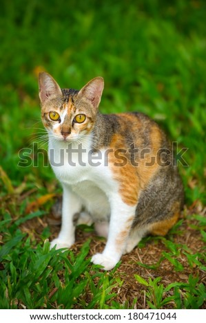 Thai cat sitting with greenery background