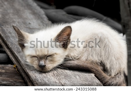 Thai cat was sleeping under sunshine. - stock photo