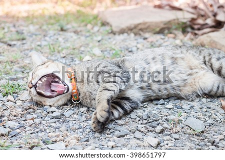 Thai cat yawning with relax post, stock photo