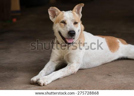 thai dog - stock photo