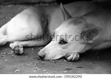 how to stop dog weeing on floor