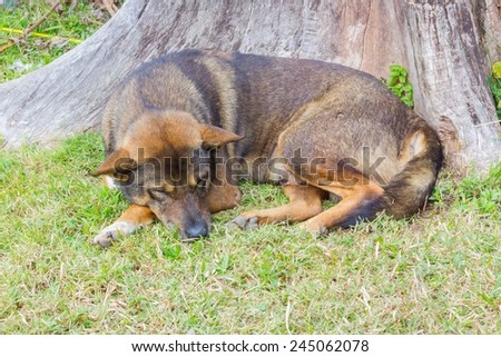 Thai dog sleep happily in grass yard at dead tree - stock photo