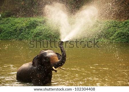 Thai elephant  daily bath  in Lumpang province, Thailand - stock photo