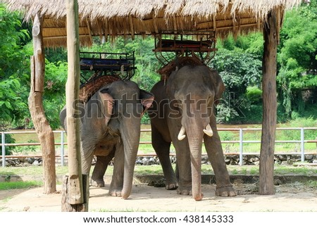 Thai elephants in Thailand