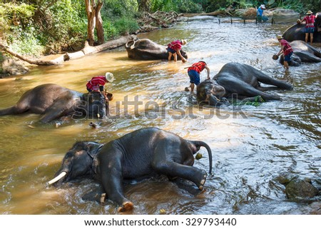 Thai elephants taking a bath with mahout (elephant driver, elephant keeper) in Maesa elephant camp, Chiang Mai , Thailand - stock photo
