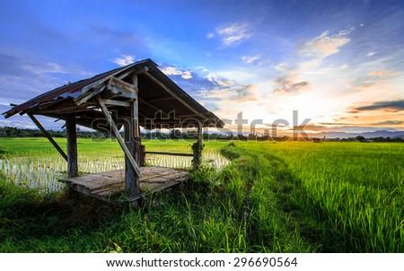 Thai farmer hut in rice  field with sunset scene, Thailand - stock photo