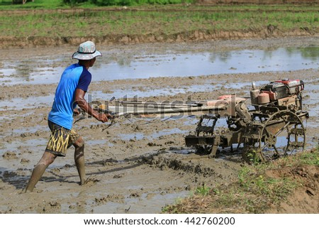 Thai Farmer Using Walking Tractors For Cultivated Rice Plantation.