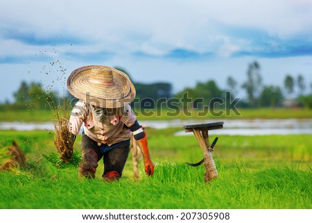 Thai farmers are working. - stock photo