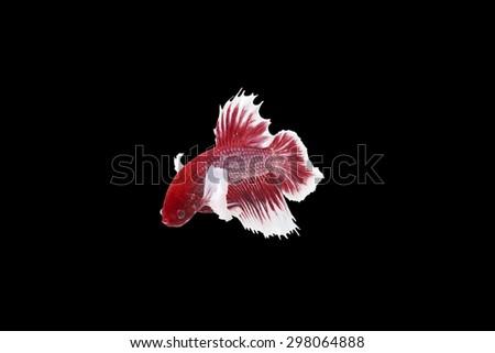 thai fish - stock photo
