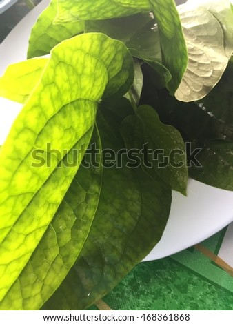 Thai herb with shadow