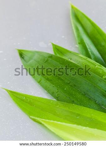 Thai herbal ingredient spas pandanus leaf,sweet and earthy aroma . - stock photo