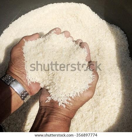 Thai jasmine rice in hand - stock photo