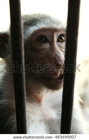 Thai Monkey  in a cage