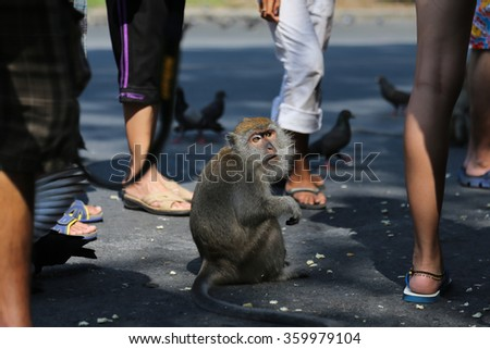 Thai monkey is looking traveler,selective focus,public mountain