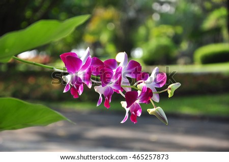 Thai Orchid In The Park
