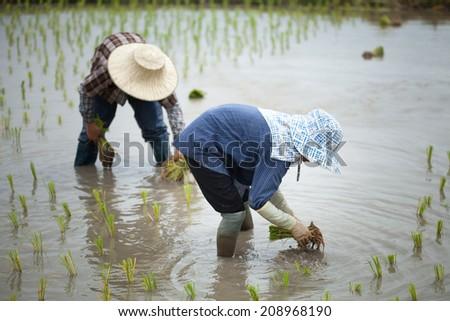 Thai peasant agriculture - stock photo