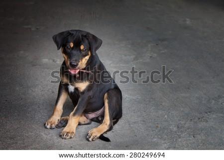 thai stray dog lying on cement floor. - stock photo