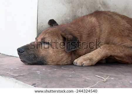 Thai Stray Dog sleep - stock photo