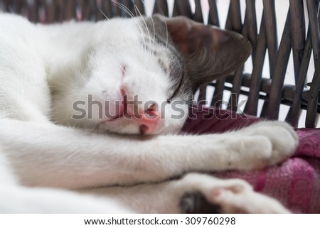 Thai Street Cat with the Grey and White color's sleeping in the basket with the super comfy face (Selective focus point) - stock photo