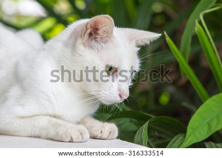 Thai white cat is sitting
