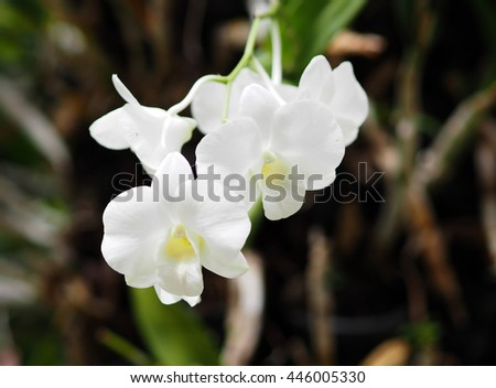 Thai white orchid in the park of temple Ayutthaya
