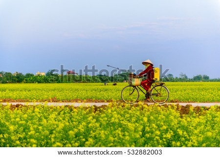ThaiBinh, Viet Nam, december, 7, 2016: a woman cycling on Council reform at Thai Binh, Viet Nam