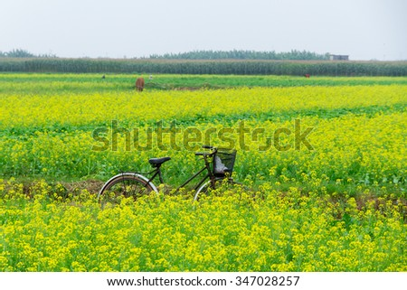 Thaibinh, Vietnam - November 28, 2015:Cycle on yellow flower field improvements.