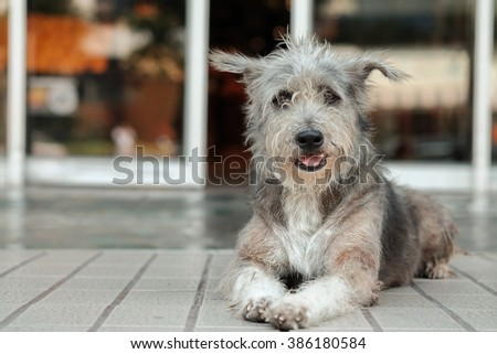 Thailand Dog Looking a Hope - stock photo