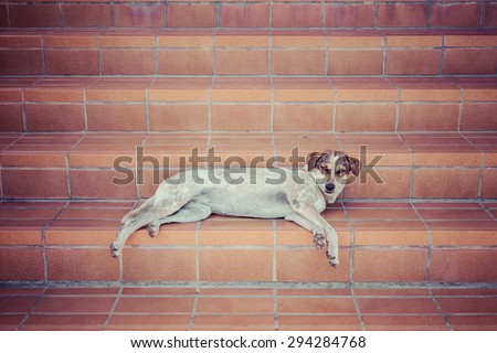 Thailand dog lying on the stairs, process color - stock photo