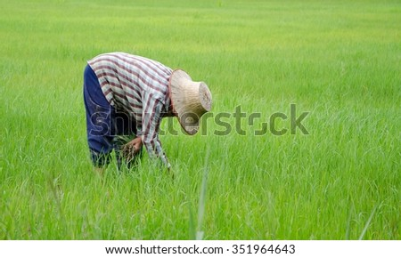 Thailand, farmers are planting rice