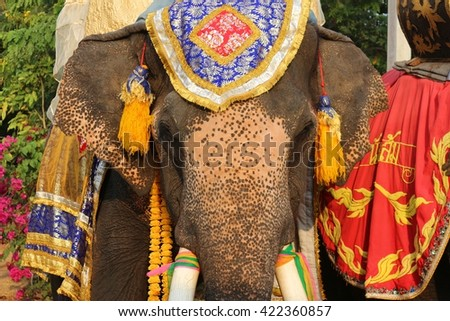 "THAILAND  - JANUARY 10:Elephants  waiting for give food for Buddhist monk in special festival "" ELEPHANT BACK HOME"" , 10 January 2016 on  Changwat Chaiyaphum ,Northeastern , Thailand"