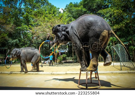 THAILAND, KOH SAMUI, 4 APRIL 2013 Elephant show, Thailand in Koh Samui - stock photo
