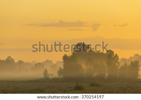 Thailand local rice paddy field with sunset