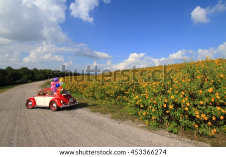 THAILAND-NOVEMBER 2015 : Red Volkswagen classic car beetle  on the road in Mexican sunflower festival in Lampang Province, Thailand on November 13 2015