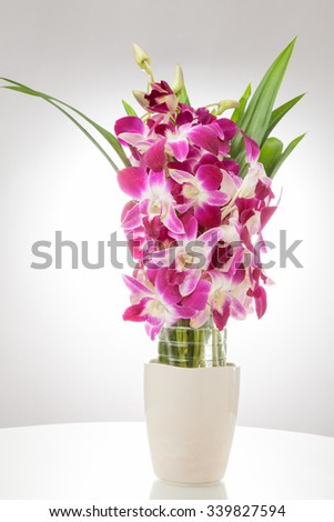 Thailand orchid, Purple color isolated on white background with free space at right side for designer / Vintage style - stock photo