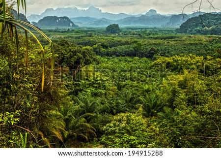 Thailand rain forest landscape - stock photo