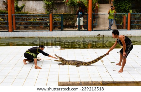 Thailand, Samui -  December 14, 2014: excursion to a farm of crocodiles, show with crocodiles - stock photo
