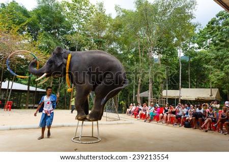Thailand, Samui -  December 14, 2014: tourist excursion, show of elephants - stock photo