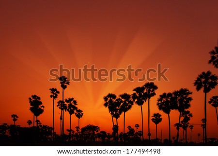 Thailand sunset silhouette palm
