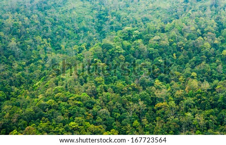 Thailand Tree and Forest - stock photo
