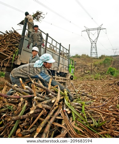 THANH HOA, Vietnam, March 16, 2014 a group of farmers harvesting sugarcane - stock photo