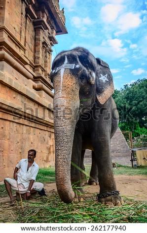THANJAVOUR, INDIA - FEBRUARY 13: An unidentified man sits at the gate of the Temple Brihadishwara next to an elephant. India, Tamil Nadu, Thanjavour. February 13, 2013 - stock photo