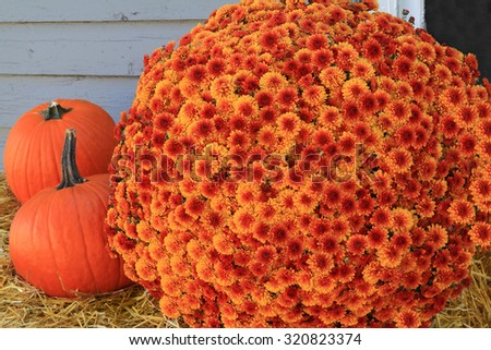 Thanksgiving and Autumn, Orange Flowers Fall Mums and Pumpkins over hay in front of window and barn wall.