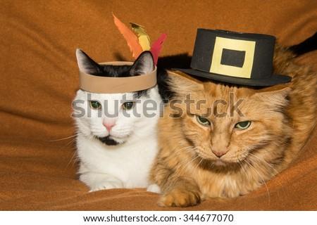 Thanksgiving Cats - stock photo