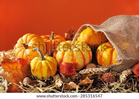 Thanksgiving - different pumpkins in jute bag on straw with copyspace in front of orange background