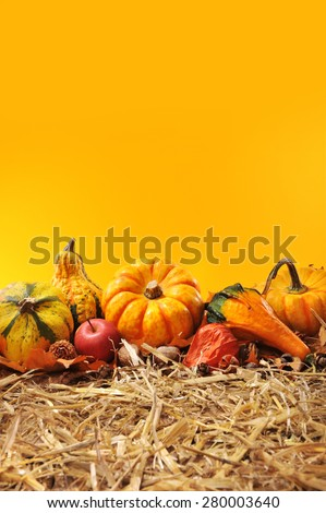 Thanksgiving - many different pumpkins on straw in front of orange background with copyspace
