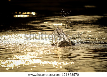 The action of water in lake of lures while the fisher man jerking the lures back. - stock photo